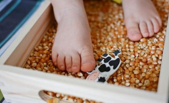 Farmer kukurydzy - zabawa sensoryczna z ziarnem